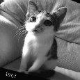 Home : Cute Cards : Cute Etc - Kitty!