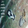 April Fool Skunk And Cats.