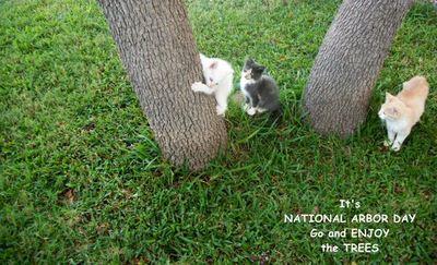 Arbor Day Kittens.