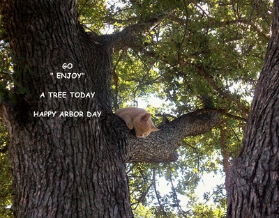 Arbor Day Tree Cat.