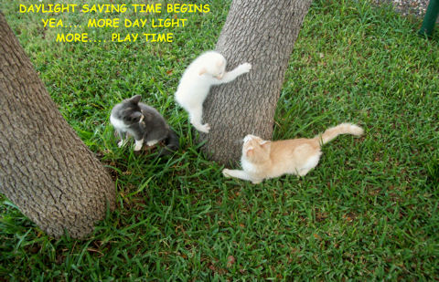 Daylight Savings Kittens Playing.
