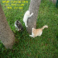 Daylight Savings Kittens Playing.