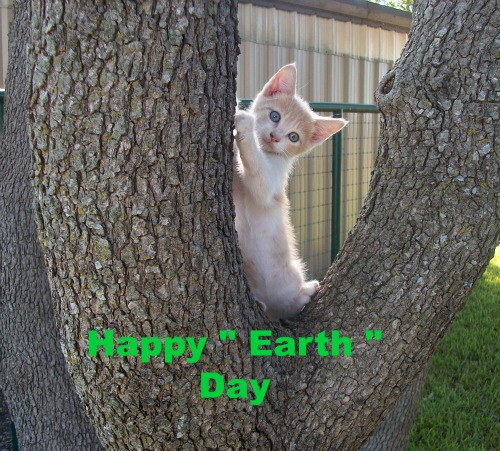 Earth Day Kitten.
