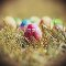 Easter: Egg Hunt