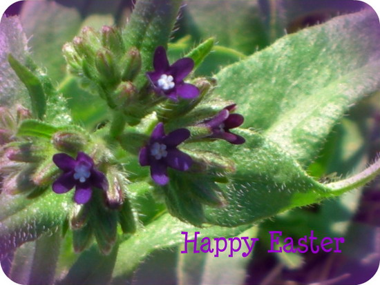 Easter Greetings.