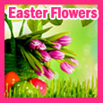 Beautiful Easter Flowers For You!