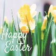 Daffodil Delight.