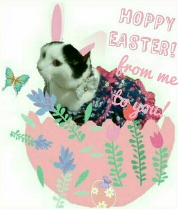 Hoppy Easter Cat.