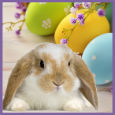 Egg-Cellent Easter!