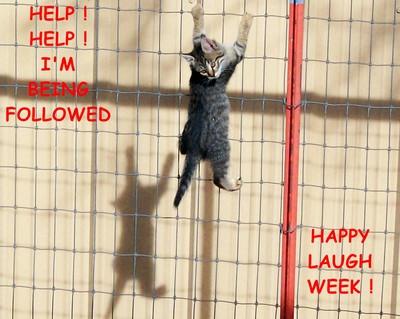 Help Kitty Help!
