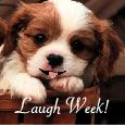 More Fun And Cheer In Laugh Week!