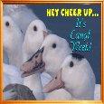 A Goose Laugh Card.