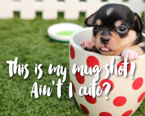 Mug Shot Puppy!