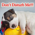 Don't Disturb Me!!!