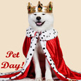 Pet Day Wishes...