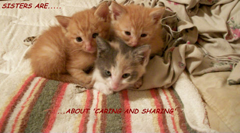 Sisters Card With Kittens.