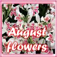 August Flowers Keep You Smile!