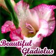 Beautiful Gladiolus...