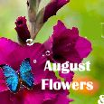 Home : Events : August Flowers 2018 [August] - A Wish For You In August!