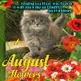 Home : Events : August Flowers 2018 [August] - A Cute August Flowers Ecard.
