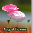 Colorful And Bright August Month!