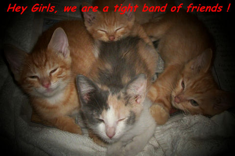 Friendship Band Of Kittens.