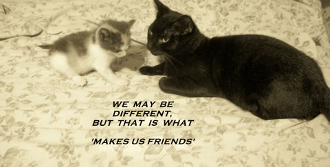 Friendship Thoughts Cats.