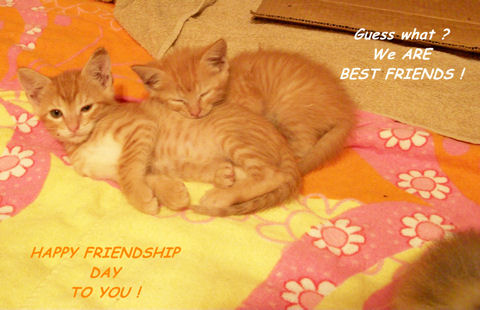 Friendship Day Best Friends Kittens.