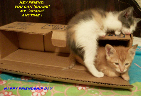 Friendship Day Fun Kittens.