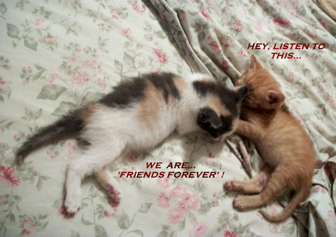 Friends Forever Kittens.