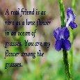Flower Among The Grasses...