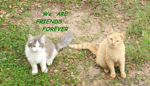 Friendship Week Cats.