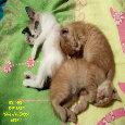 Girlfriend's Day Kittens.