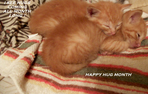 Hug Month Kittens.