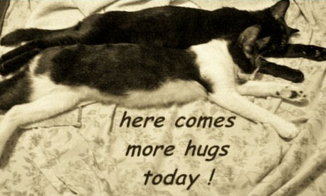 Hug Your Sweetheart Cats.