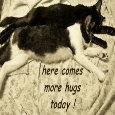 Hug Your Sweetheart Cats.