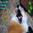 Laughing Fox.