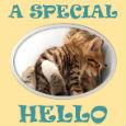 Special Hello.