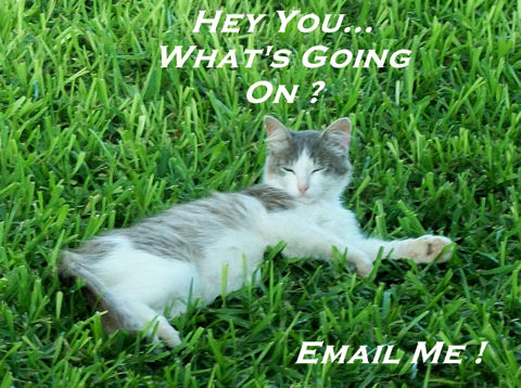 Send An Email Cat!