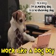 Working Dog...