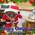 Christmas Cat.