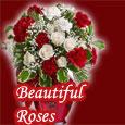 Sending Beautiful Roses...