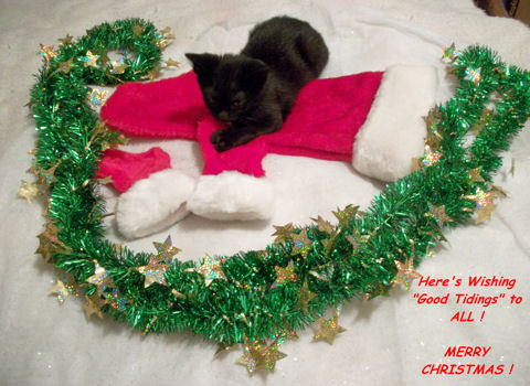 Wishing Good Tidings Cat.