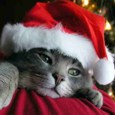 Miss You Xmas Kitten.