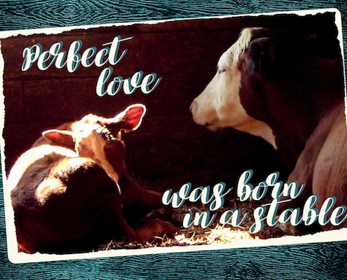 Perfect Love Was Born In A Stable.