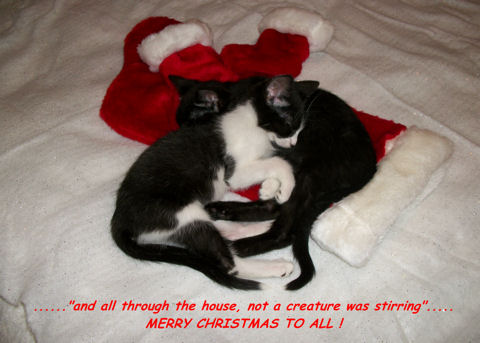 Quoting Christmas Kittens.