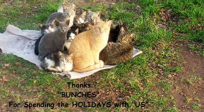 Holiday Thanks Cats.