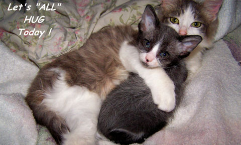 International Hugging Day Cats.