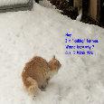 Winter Cat.