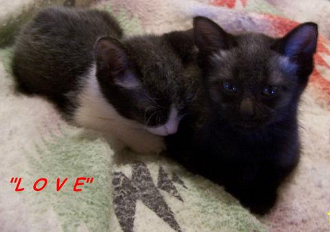 Love Kittens.